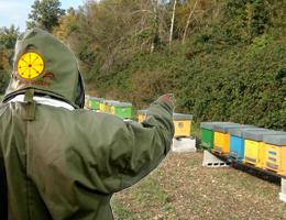 Apicoltore che chiama con sfondo apiario